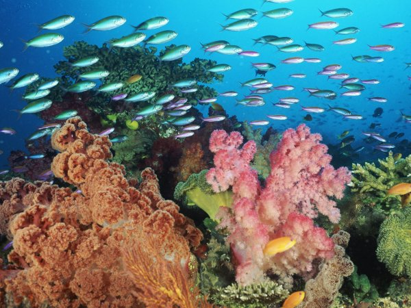 Coral Fishes. Coral Fishes