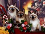 three cats xmas